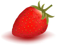 Rote Erdbeere. Lizenzfreies Stockbild