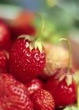 Rote Erdbeere Stockbild