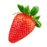Rote Erdbeere lokalisiert Stockfotos