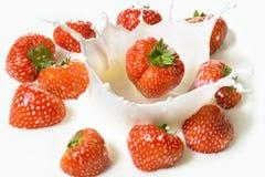 Rote Erdbeere trägt Früchte, fallend in die Milch Lizenzfreies Stockfoto