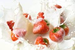 Rote Erdbeere trägt Früchte, fallend in die Milch Stockfotos