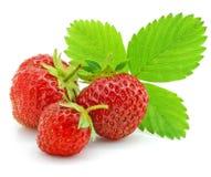 Rote Erdbeerefrüchte mit den grünen Blättern getrennt Lizenzfreie Stockfotos
