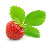 Rote Erdbeerefrucht mit den grünen Blättern getrennt Stockfoto