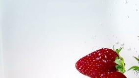 Rote Erdbeeren der frischen Frucht, die in Wasser mit Spritzen auf weißem Hintergrund, Erdbeere für Gesundheit und Diät, Nahrung  stock video