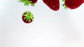 Rote Erdbeeren der frischen Frucht, die in Wasser mit Spritzen, Schuss in der Zeitlupe auf weißem Hintergrund, Erdbeere für Gesun stock footage