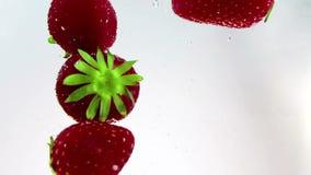Rote Erdbeeren der frischen Frucht, die in Wasser mit Spritzen, Schuss in der Zeitlupe auf weißem Hintergrund fallen stock video