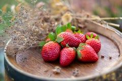 Rote Erdbeeren und trockenes Gras auf einem hölzernen Weinfaß in einem Garten stockbild