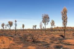 Rote Erde und Bäume brannten durch Ureinwohner im australischen Hinterland an einem schönen sonnigen Tag in Ayers-Felsen stockfotografie