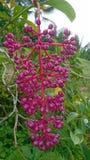 Rote exotische Blume Lizenzfreies Stockbild