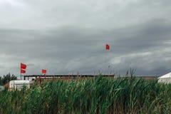 Rote Fahnen auf dem grünen Kriechpflanzen-Hintergrund Abstraktes Ruhe-Konzept Lizenzfreies Stockbild