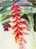 Rote Farbe der abstrakten Malerei des Aquarells ursprünglichen von heliconia Blume Stockbild