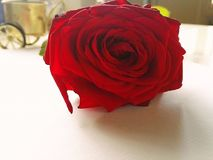 Rote Farbe Rose auf Tabelle lizenzfreie stockfotos