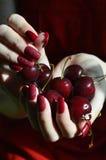 Rote Farben: Beeren der Vogelkirsche in den Händen stockfotos