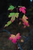 Rote Farben des Herbstes Stockfoto