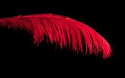 Rote Feder stockbild