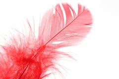 Rote Feder im Weiß Stockbild