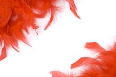Rote Federn Stockbild
