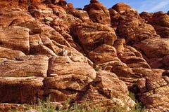 Rote Felsen-Schlucht-nationaler Erhaltungs-Bereich stockfoto