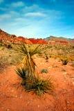 Rote Felsen-Schlucht, Nevada Lizenzfreie Stockfotografie