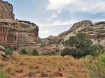 Rote Felsen von Schlucht-Kanten Lizenzfreie Stockfotos