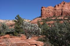 Rote Felsen von Sedona Arizona lizenzfreies stockbild