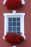 Rote Fenster-Schönheit Stockfoto