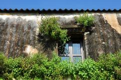 Rote Fenster und Kriechpflanzenwachsen Lizenzfreie Stockfotografie