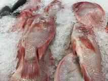 Rote Fische Stockbilder