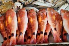 Rote Fische Lizenzfreie Stockbilder
