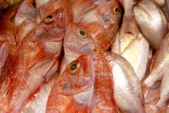 Rote Fische auf Nahrungsmittelmarkt Lizenzfreie Stockfotos