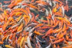 Rote Fische und Goldfische Lizenzfreie Stockfotos