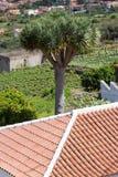 Rote Fliesen der Hintergrundverzierungs-Terrakotta auf Dach in Teneriffa, kanarische Insel Lizenzfreies Stockbild