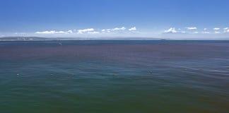 Rote Flut im Meerwasser Lizenzfreie Stockfotografie