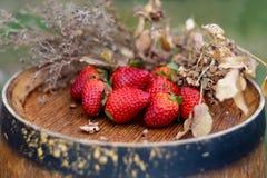 Rote Früchte oder Beeren und trockenes Gras auf einer Holzoberfläche im Garten lizenzfreie stockfotografie