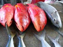 Rote frische Fische Stockfotografie