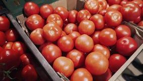 Rote frische Tomaten auf Niederlassung im Korb auf einem Supermarktregal 4K stock video footage