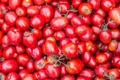 Rote frische Tomaten im lokalen Markt Lizenzfreies Stockfoto
