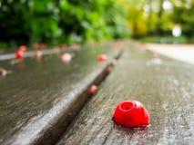 Rote Frucht des Herbstes von Taxus Lizenzfreies Stockbild