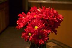 Rote Gänseblümchen in einem Ausgangsinnenraum lizenzfreie stockfotografie