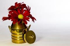 Rote Gänseblümchen in einer kupfernen Milchdose Stockfotografie
