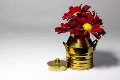 Rote Gänseblümchen in einer kupfernen Milchdose Stockfoto
