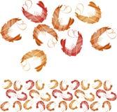 rote Garnelen stock abbildung