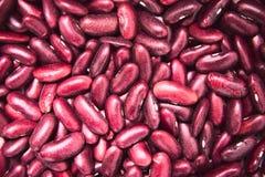 Rote Gartenbohnen stockfotografie