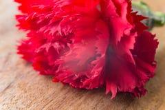 Rote Gartennelke auf braunem Holz, Weinleselicht Stockbilder