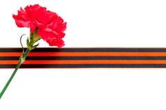 Rote Gartennelke mit George-Band lokalisiert auf dem weißen Hintergrund Lizenzfreie Stockfotografie