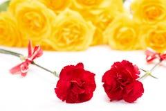 Rote Gartennelkeblumen Lizenzfreies Stockfoto