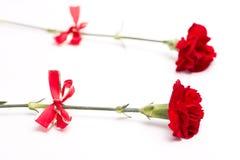 Rote Gartennelkeblumen Stockfotos