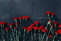 Rote Gartennelken setzten an eine Granitoberfläche, die nach dem Regen naß ist Lizenzfreie Stockfotografie