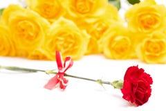 Rote Gartennelkenblume Stockfoto