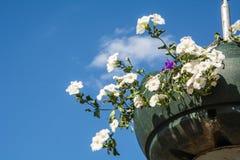 Rote Gartenpelargonienblumen, Abschluss herauf Schuss/Pelargonie blüht,/Lavatera-/Sommerpetunienblumen in der Zeit des Gartens im Lizenzfreie Stockbilder